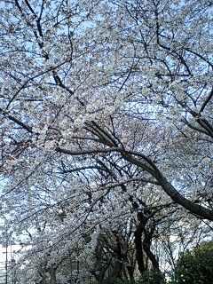 やっとこさ春♪_c0038100_1318979.jpg