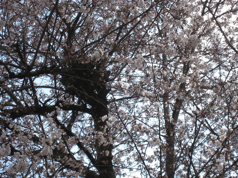 春ですね。_f0141609_23364219.jpg