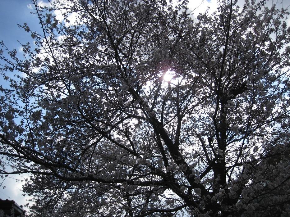 春ですね。_f0141609_23374634.jpg