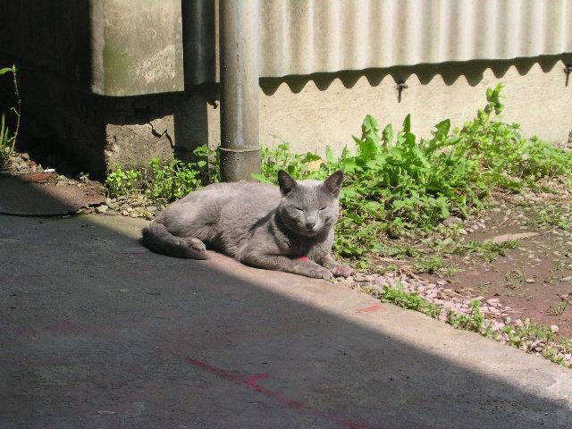 Take a nap Kitten_d0130115_22135163.jpg