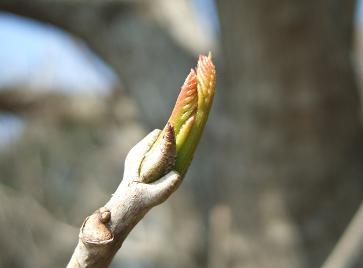 春の六義園ツアー_f0085219_1920558.jpg