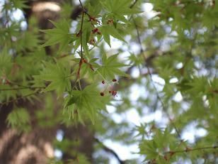 春の六義園ツアー_f0085219_1943582.jpg