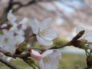もう一つの春ツアー_f0085219_23193541.jpg