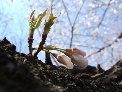もう一つの春ツアー_f0085219_23195782.jpg