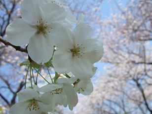 もう一つの春ツアー_f0085219_23215378.jpg