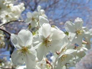 もう一つの春ツアー_f0085219_2323184.jpg