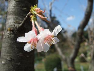 もう一つの春ツアー_f0085219_23275529.jpg