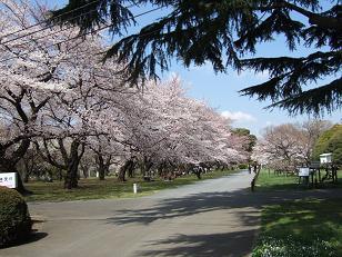 もう一つの春ツアー_f0085219_23304269.jpg
