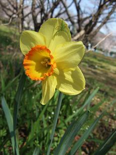 もう一つの春ツアー_f0085219_23502740.jpg