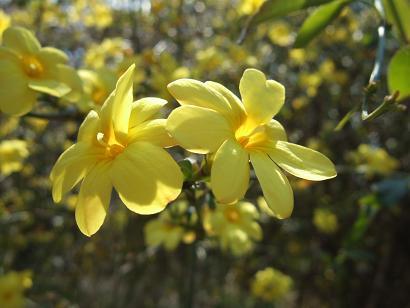 もう一つの春ツアー_f0085219_2354384.jpg