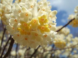もう一つの春ツアー_f0085219_23572349.jpg