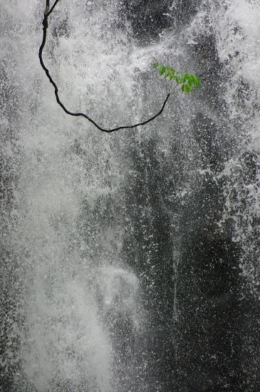雨季真っ只中クィーンズランド K20D撮りおろし_f0050534_2293941.jpg