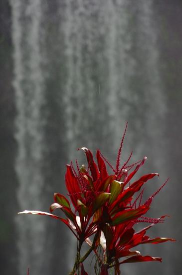 雨季真っ只中クィーンズランド K20D撮りおろし_f0050534_2295642.jpg