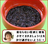 c0071040_1652634.jpg