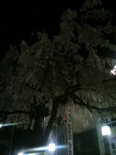 花よりタコ焼き_e0013944_8194091.jpg