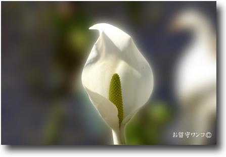 f0111147_14483865.jpg