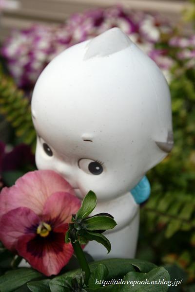 花キューピー_a0106457_22434791.jpg