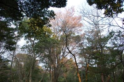 シュンラン…1株に14輪の花   by  (TATE-misaki)_c0108460_2043509.jpg