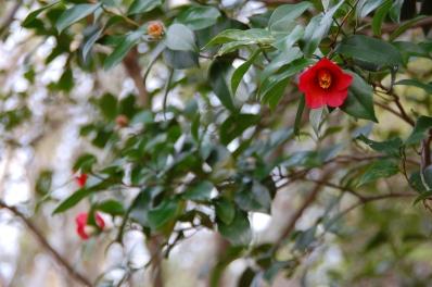 シュンラン…1株に14輪の花   by  (TATE-misaki)_c0108460_20453571.jpg