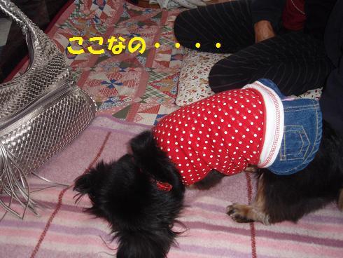 c0151866_2054185.jpg