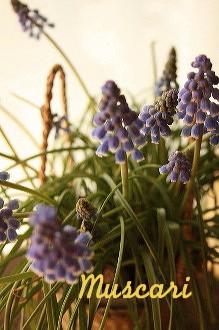 春のベランダ_c0156468_16234915.jpg