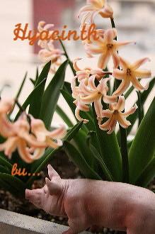 春のベランダ_c0156468_16242291.jpg