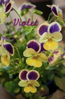 春のベランダ_c0156468_16251628.jpg