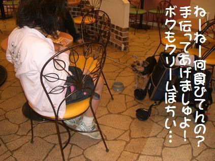 a0105570_10103622.jpg