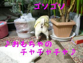 c0139488_1640091.jpg