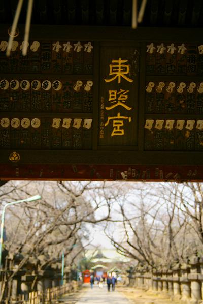 桜が咲ききる前に_d0028499_1065516.jpg