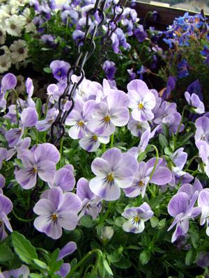 春らんまん♪_a0047200_11171394.jpg