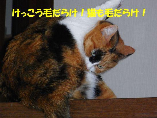 c0039114_1724521.jpg