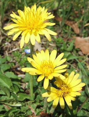 もう一つの春ツアー_f0085219_0105389.jpg