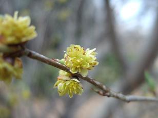 もう一つの春ツアー_f0085219_021068.jpg