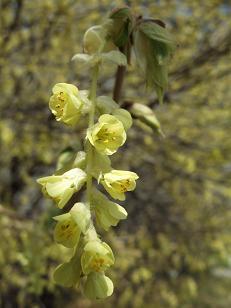 もう一つの春ツアー_f0085219_0244432.jpg