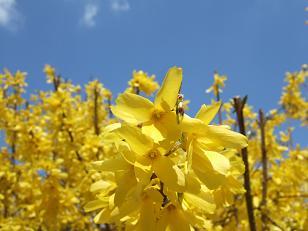 もう一つの春ツアー_f0085219_073340.jpg