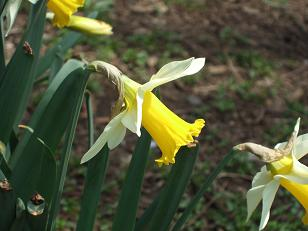 もう一つの春ツアー_f0085219_14316.jpg