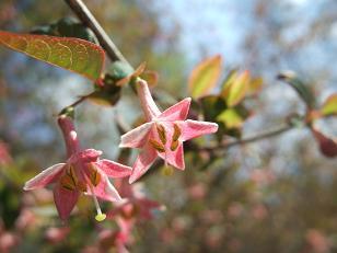 もう一つの春ツアー_f0085219_17461.jpg