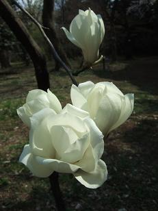 もう一つの春ツアー_f0085219_191029.jpg