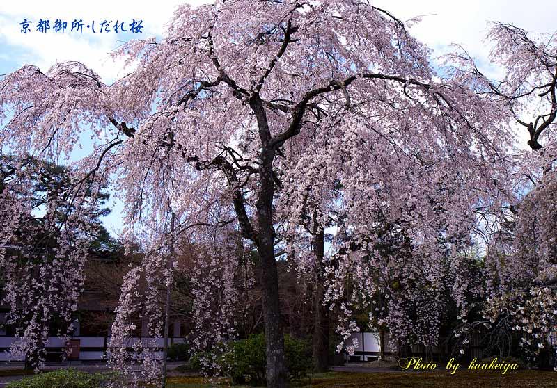 f0035323_2011472.jpg
