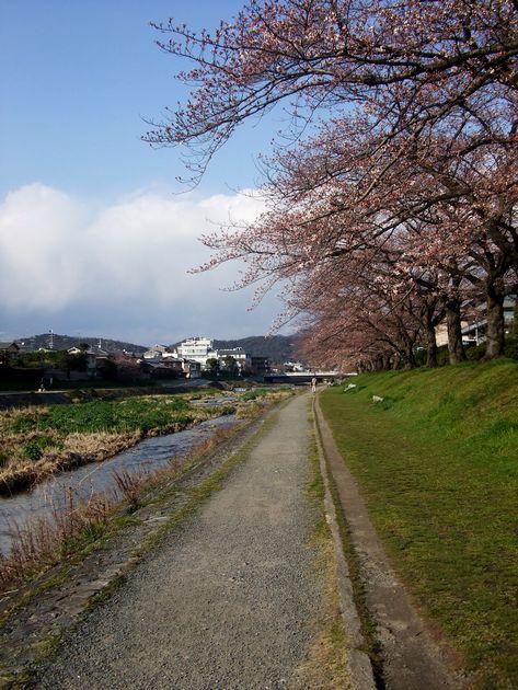「京都・北山・鴨川の風景&桜便り」_d0133024_2391980.jpg