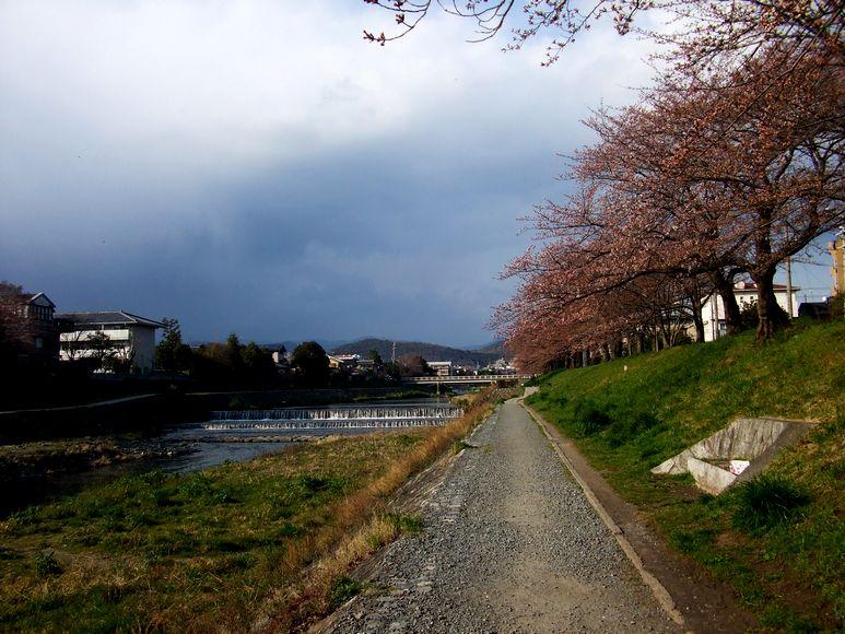 「京都・北山・鴨川の風景&桜便り」_d0133024_2394494.jpg