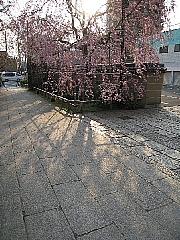 4月20日(日)~4月22日(火)姫路合宿ご参加の皆様へ。_d0046025_125926.jpg
