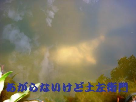 d0137326_17263418.jpg