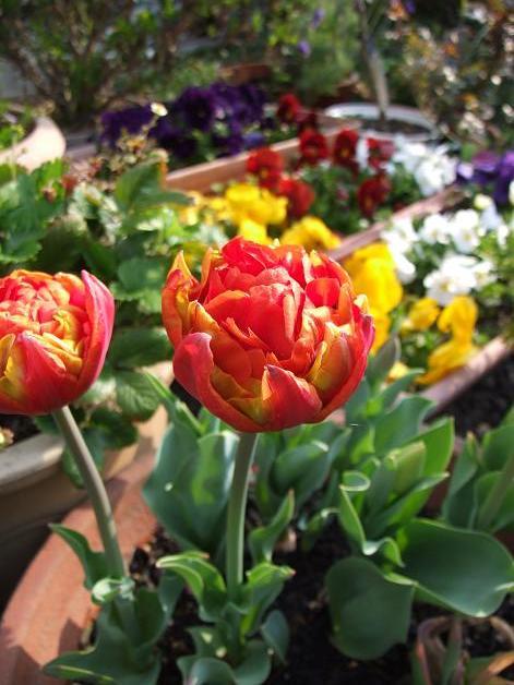 春のお散歩♪_b0089338_361226.jpg