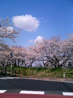 桜色・SON四郎_a0103940_2511723.jpg
