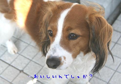 d0013149_2403812.jpg
