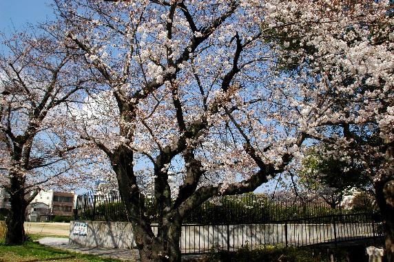春の便り_b0093754_03989.jpg