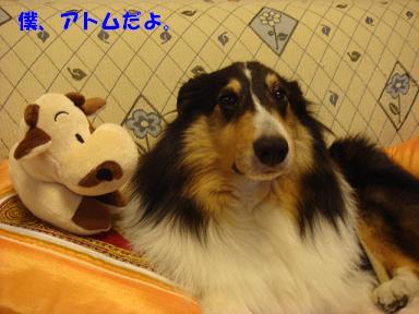 f0046854_2011981.jpg