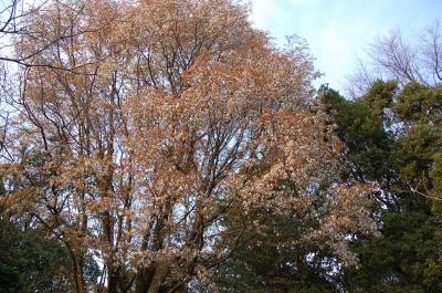 うみべの森の春    by  (TATE-misaki)_c0108460_17452448.jpg